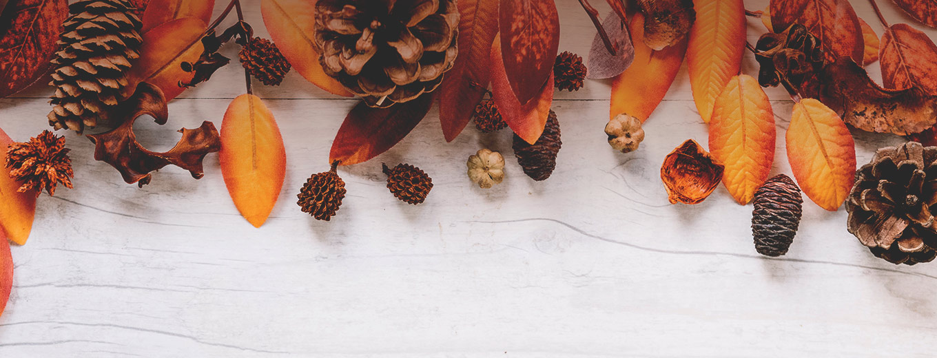 Autumn leaves and pinecones resting on white wood