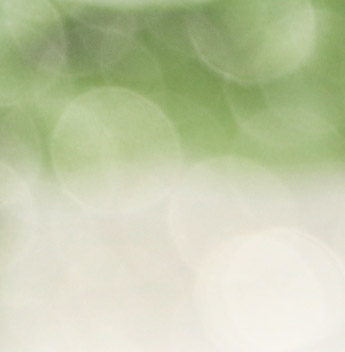 abstract bokeh of green plants