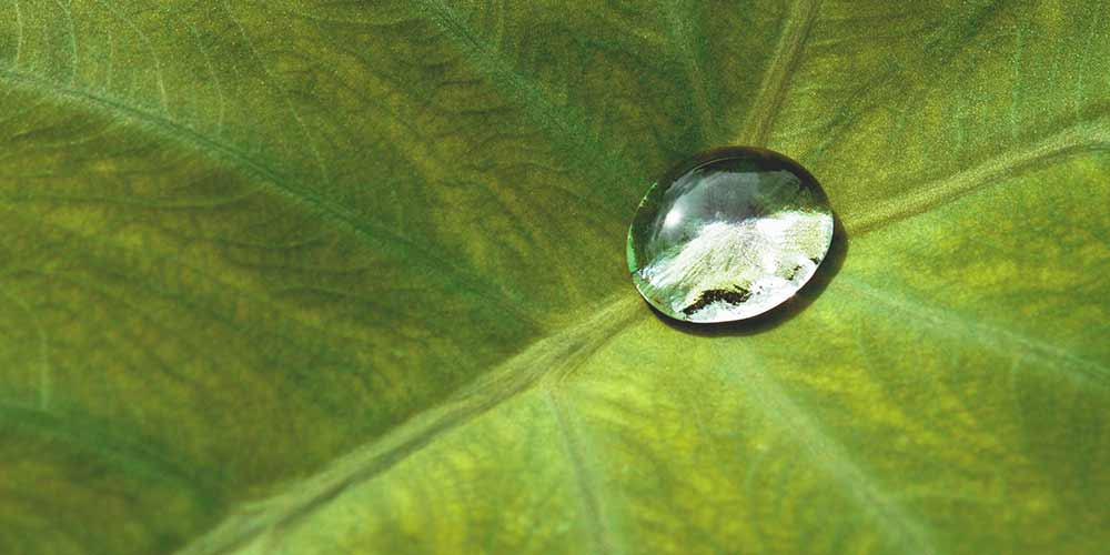 One drop of water on a leaf, illustrating BED|STÜ's water-based glues.