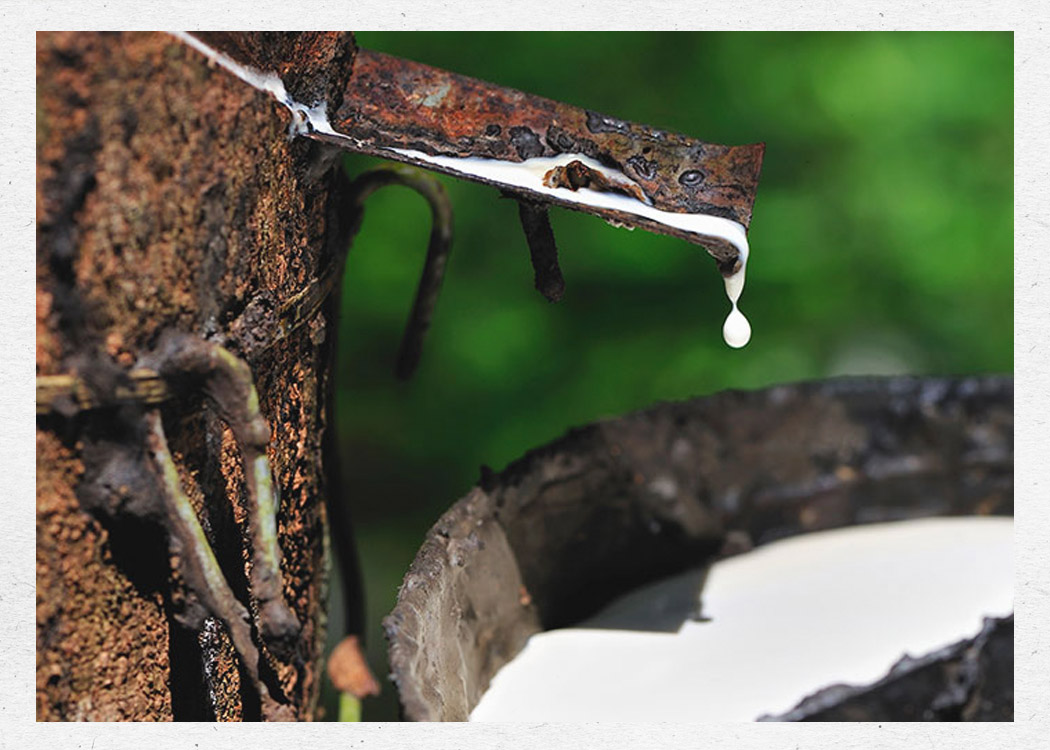 Sap from a rubber tree