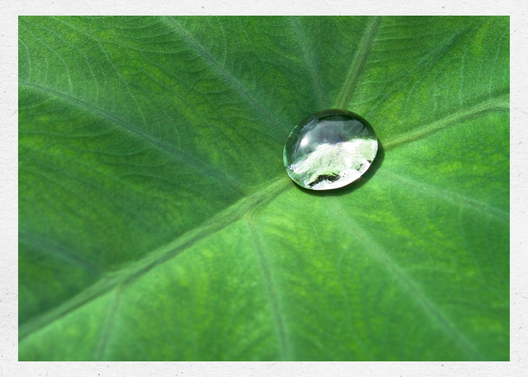 A drop of water on a leaf
